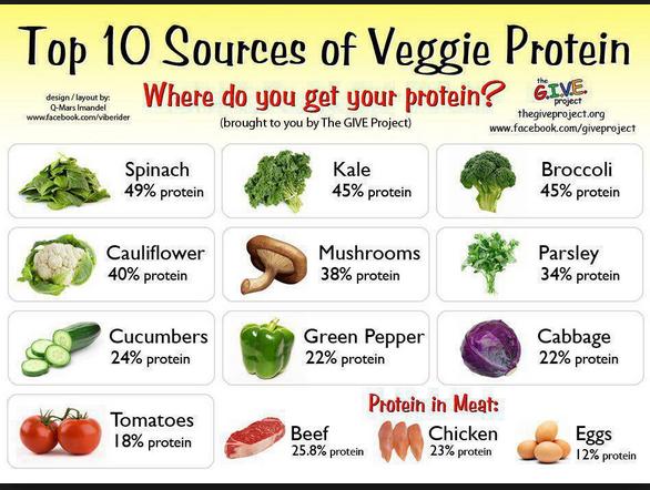 Sumber Protein Tumbuhan