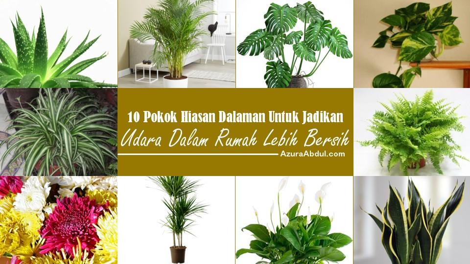 10 Pokok Bersih Udara Dalam Rumah