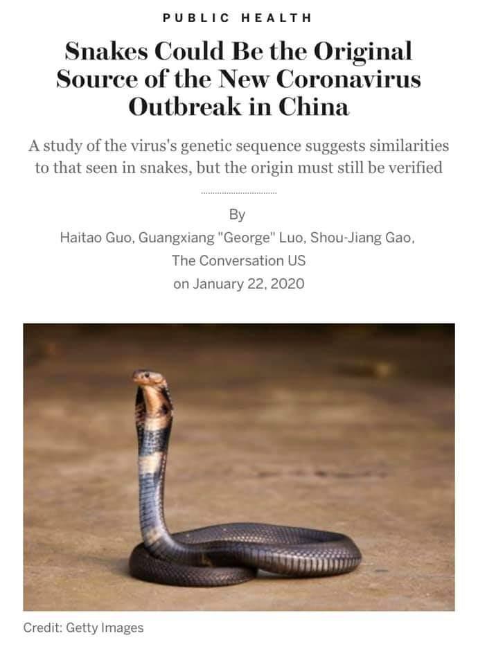 Ular punca wabak coronavirus di china