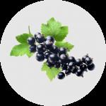 Kebaikan Anggur Hitam sebagai ramuan di dalam ResV Shaklee