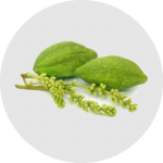 Kebaikan Chebulic Myrobalan sebagai ramuan di dalam ResV Shaklee