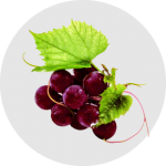 Kebaikan Hampas Anggur dan Anggur Merah sebagai ramuan di dalam ResV Shaklee